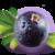 pojedyńcza jagoda acai